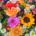 Blumenstrauß für Herrn Behrens zum 20-jährigen Jubiläum