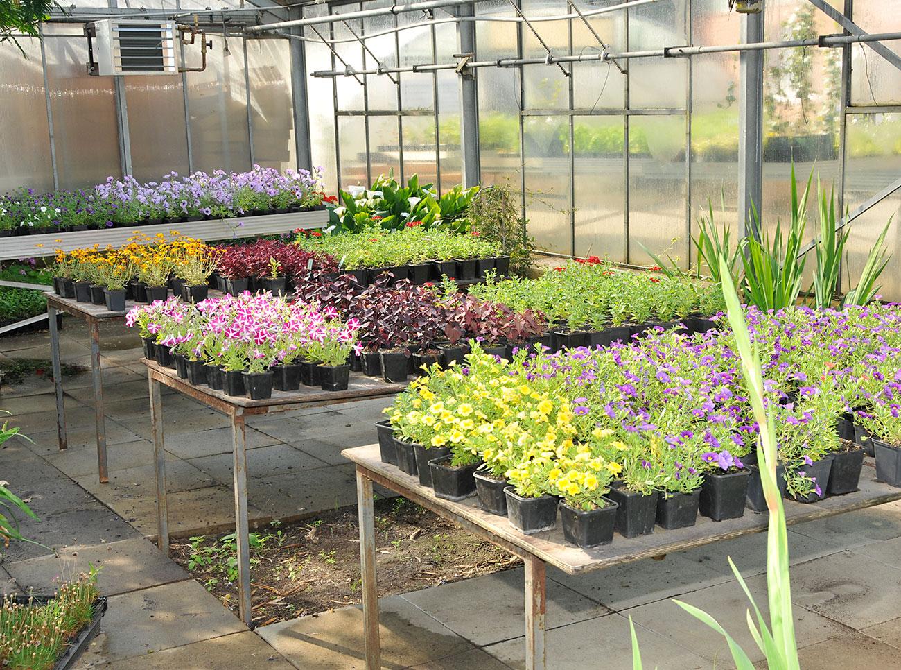 Gewächshaus mit Blumen